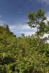 Mt. Furano-Nishi